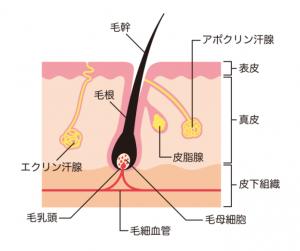 汗の説明表